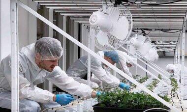 Cannerald encontra na cannabis medicinal uma alternativa eficaz para o tratamento de diversas doenças. Foto: Divulgação