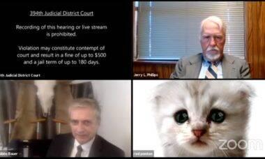 Vídeo: advogado vira gato triste em audiência virtual