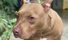 Alexandrino espera por uma família no Centro Municipal de Adoção de Cães e Gatos de SP