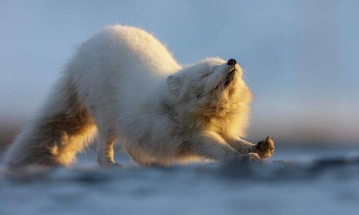 Felix Belloin, Svalbard