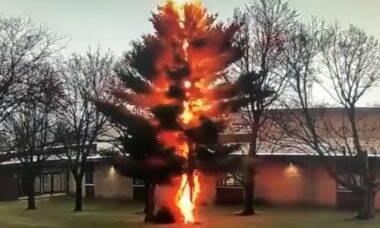 Vídeo revela o momento exato em que um raio aniquila uma árvore