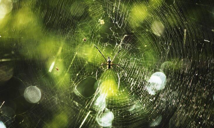 Cientistas está tentando produzir música com teias de aranha
