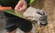 Inseto gigante de 25 cm é achado em escola na Austrália. Foto: reprodução Facebook