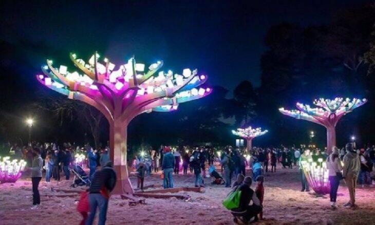 Instalação artística cria floresta de árvores artificiais cobertas de cubos de LED
