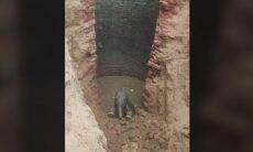 Filhote de elefante é resgatado após cair dentro de poço