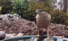 Câmera escondida registra visitantes inesperados em jardim