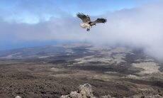 Leonardo DiCaprio investe US$ 43 milhões na preservação das Ilhas Galápagos