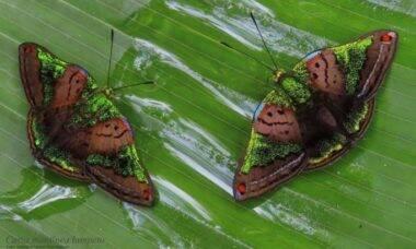 Colômbia é país com mais espécies de borboletas no mundo, aponta estudo