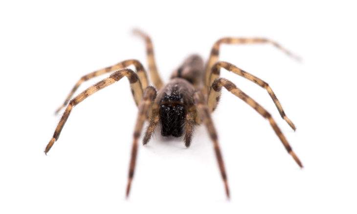 Entregador vira herói após seguir instruções para matar aranha