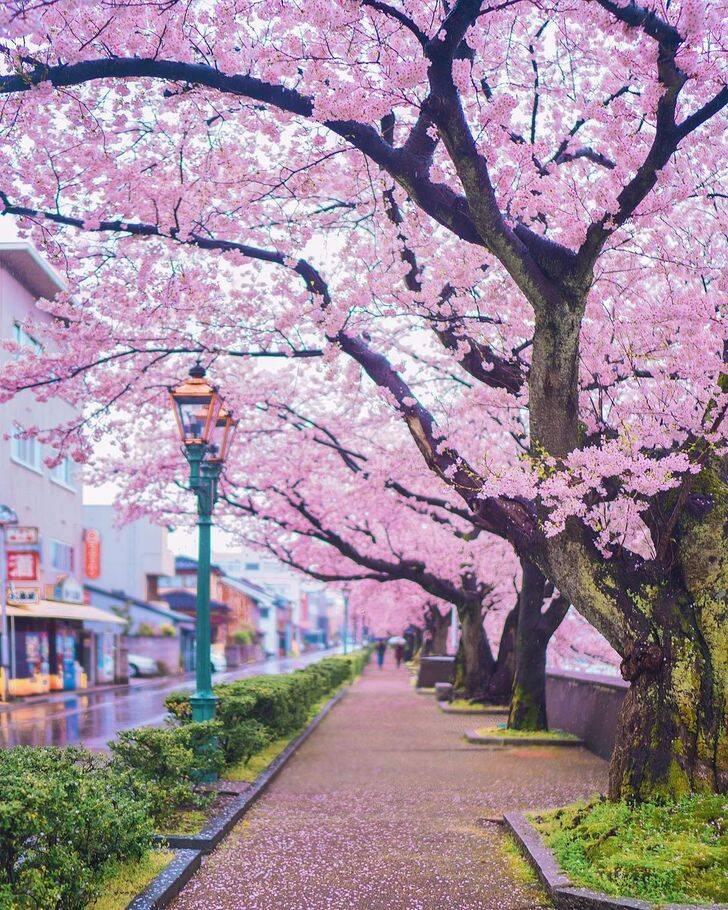 Kanazawa (Japão)