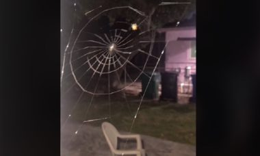 Time-lapse de aranha construindo teia viraliza no TikTok