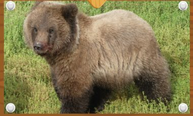 Parque dos EUA vai eleger o filhote de urso mais gordinho de 2021