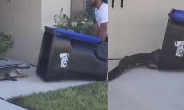 Vídeo: homem usa lixeira para capturar um crocodilo