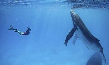 Vídeo registra encontro de casal com grupo de baleias jubarte