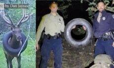 Guardas florestais consegue remover pneu preso em cervo há dois anos