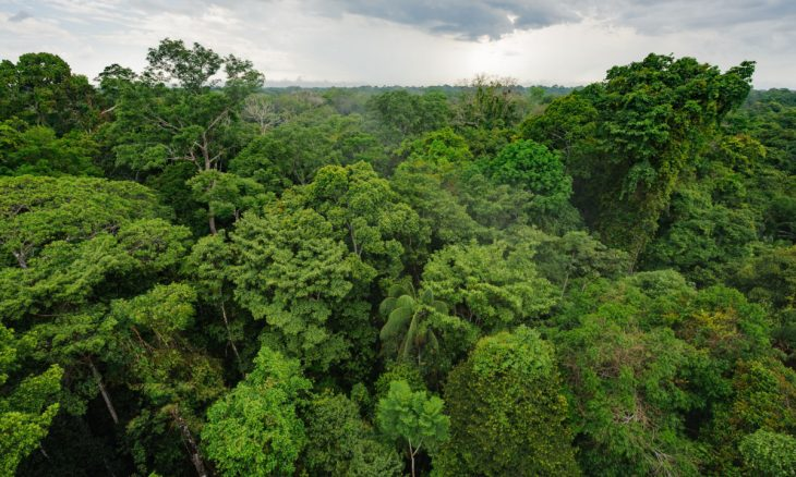Facebook proíbe venda de terras da Amazônia no Marketplace