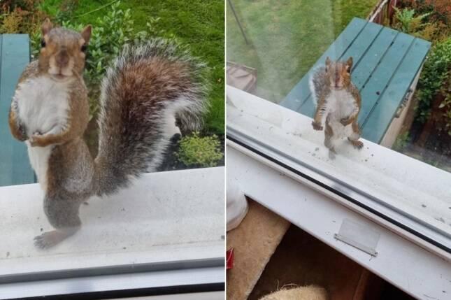 Esquilo é flagrado em pose de Mister Universo em fotografia